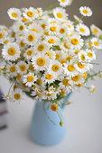 Daisies in  vase