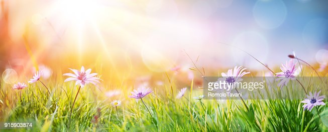 Daisies On Field - Abstract Spring Landscape : Stock Photo