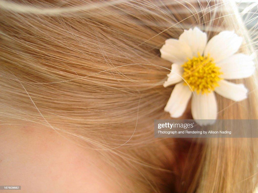 Daisy in blonde hair : Stock Photo