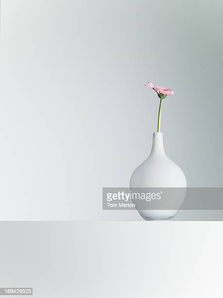 Daisy in vase on table