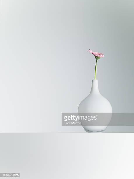 Daisy en jarrón en mesa