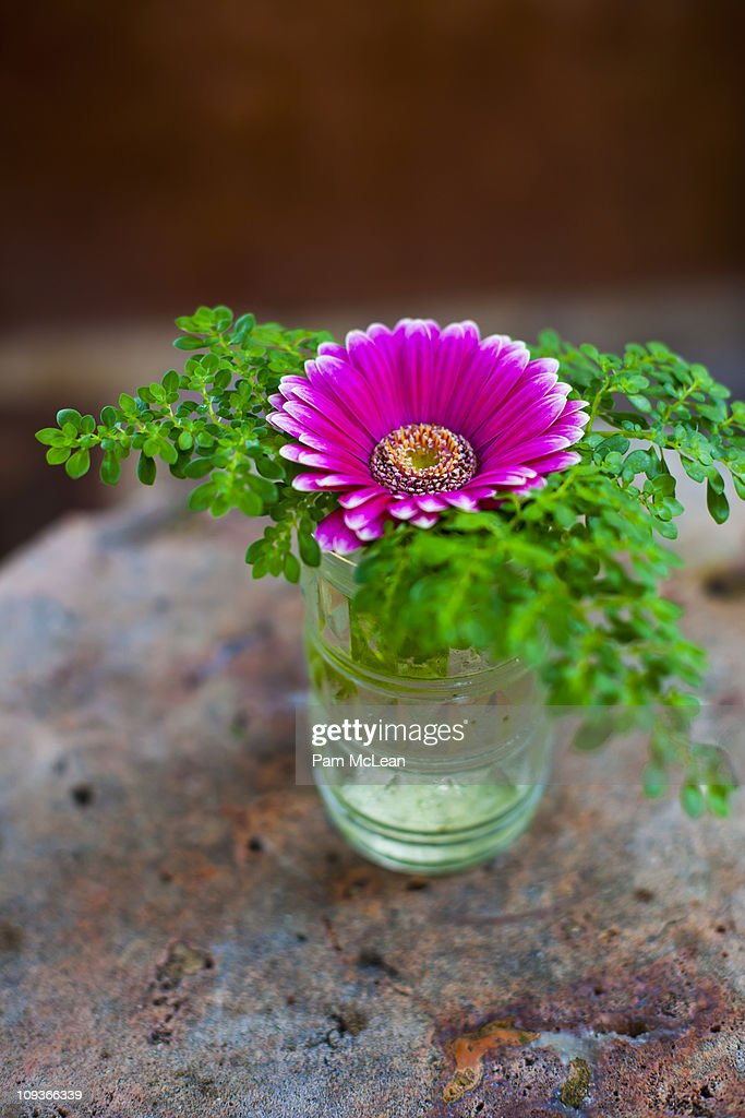 Daisy is a glass vase on a table. : Stock Photo