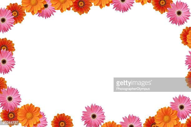Daisy spring frame XXXL