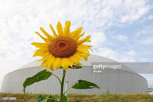 Gänseblümchen-Blume mit Hintergrund bio gas power generator