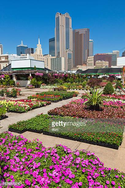 Dallas Texas skyline cityscape and flowers from Farmers' Market