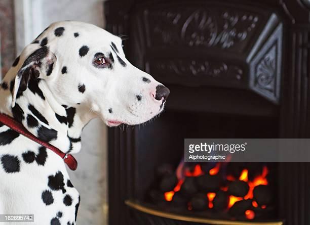 Dalmatien à côté d'un feu de