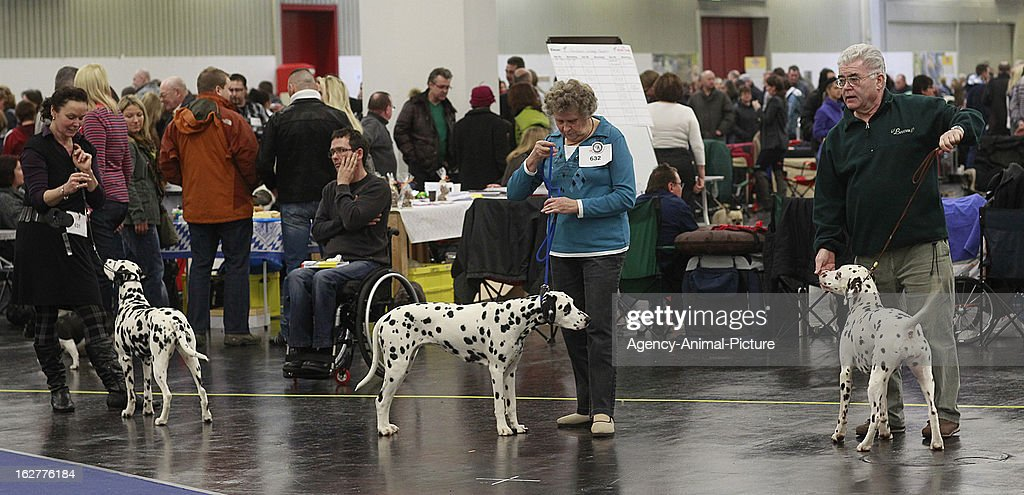 Dalmatian dog Championship at the CACIB dog exhibition at the Exhibition Centre Nuernberg on January 14, 2012 in Nuernberg, Germany.