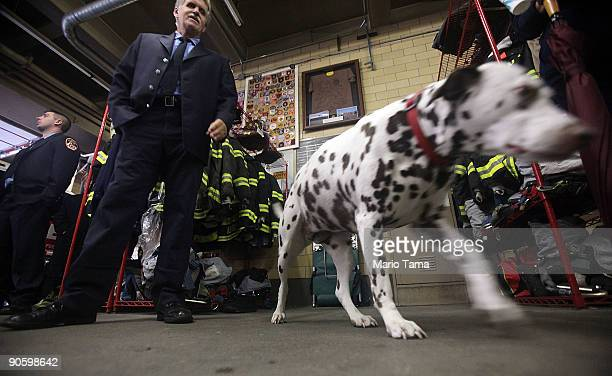 Dalmatian mascot 'Twenty' walks as firefighters take a break between ceremonies at FDNY Ladder 20 Engine 13 September 11 2009 in New York City...
