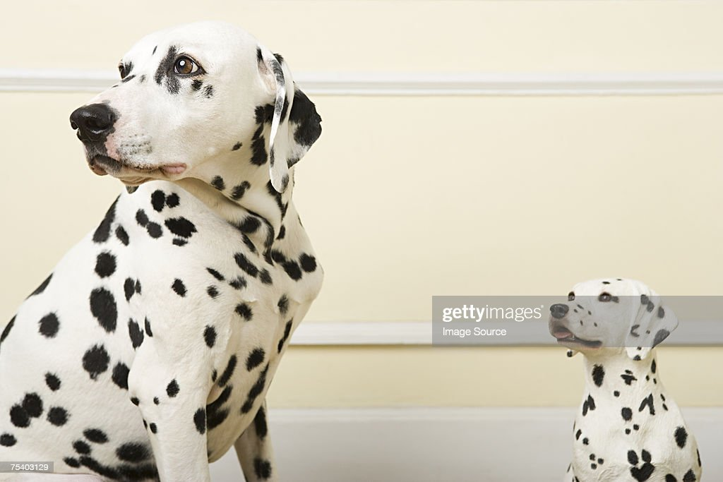 Dalmation and dog ornament : Stock Photo