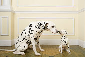 Dalmation with dog ornament