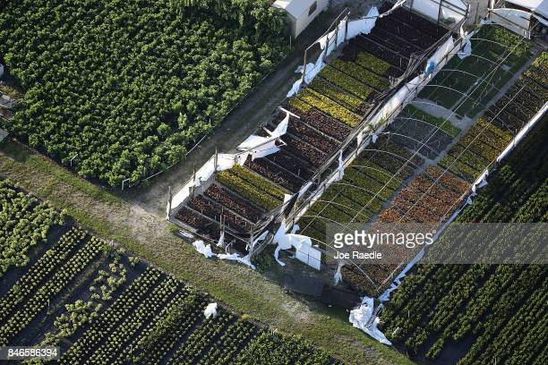 Damaged greenhouses in the agricultural area are seen after Hurricane Irma passed through the area on September 13 2017 in Homestead Florida The...