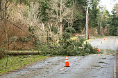 Fallen trees and damaged electrical power lines blocking a road; hazards after a natural disaster wind storm