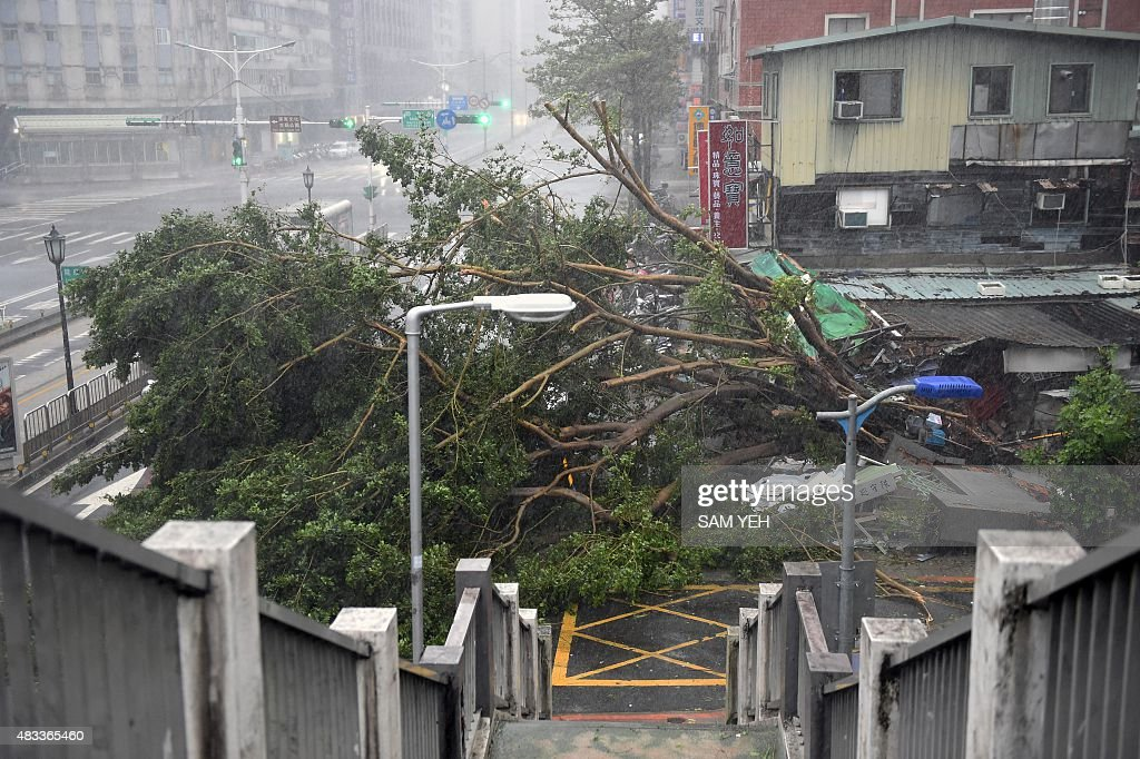 Damaged trees lie on the road as typhoon Soudelor hits Taipei on August 8 2015 Typhoon Soudelor battered Taiwan with fierce winds and rain leaving...