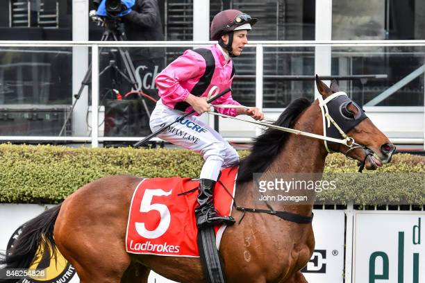 Damian Lane returns to the mounting yard aboard The Thug after winning the Norm Cove Handicap at Mornington Racecourse on September 13 2017 in...