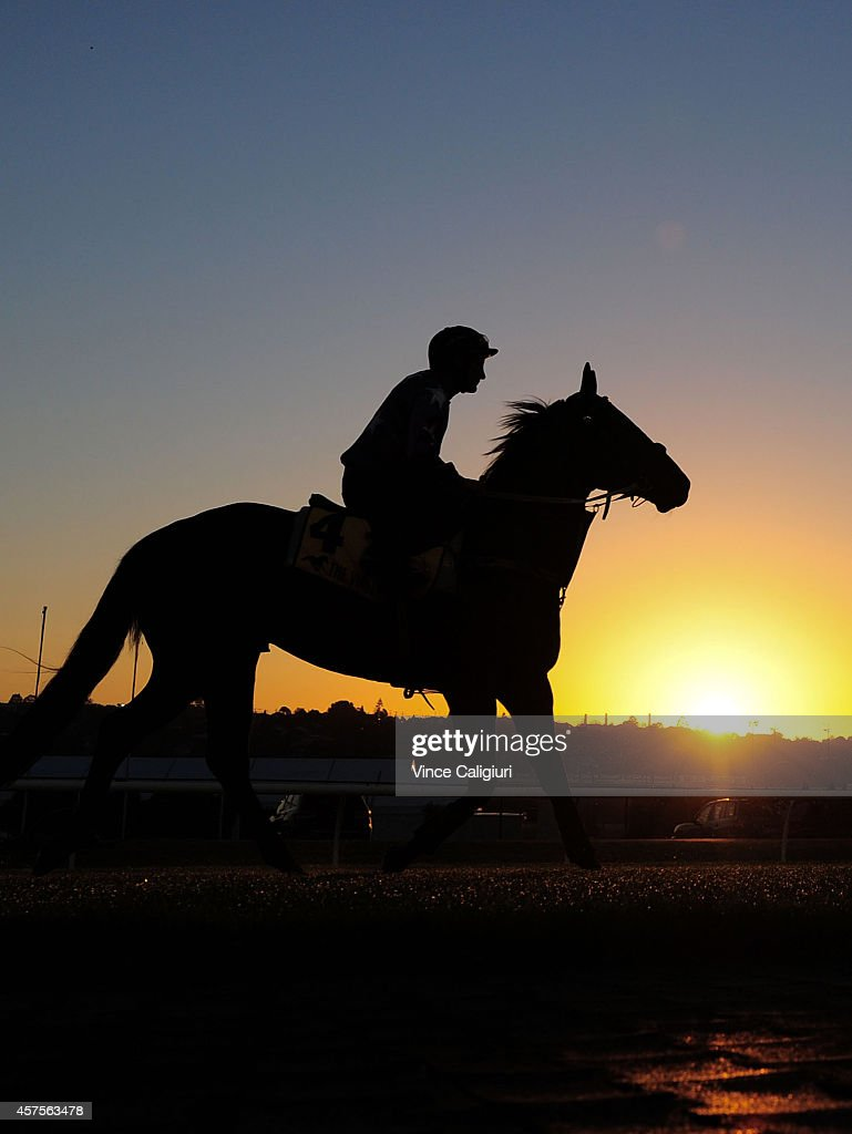 <a gi-track='captionPersonalityLinkClicked' href=/galleries/search?phrase=Damien+Oliver&family=editorial&specificpeople=210504 ng-click='$event.stopPropagation()'>Damien Oliver</a> riding Law during Breakfast With The Best Track Gallops at Moonee Valley Racecourse on October 21, 2014 in Melbourne, Australia.