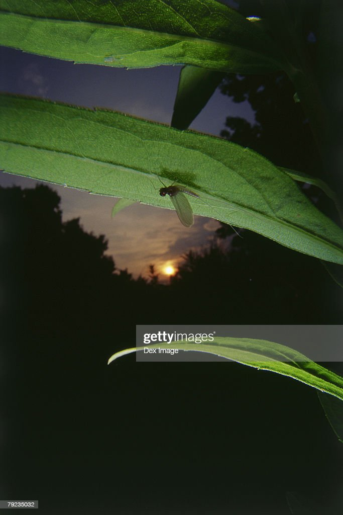 Damselfly perching on leaf, close up : Stock Photo