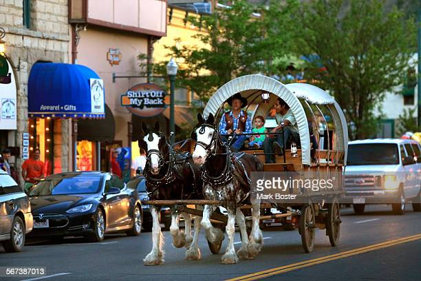Dan Harris guides his team of Cydesdales down Main Avenue in Durango where he takes tourists on covered wagton rides June 6 2014