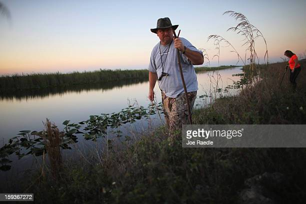 Dan Keenan and Steffani Burd hunt for python's in the Florida Everglades on the first day of the 2013 Python Challenge on January 12 2013 in Miami...
