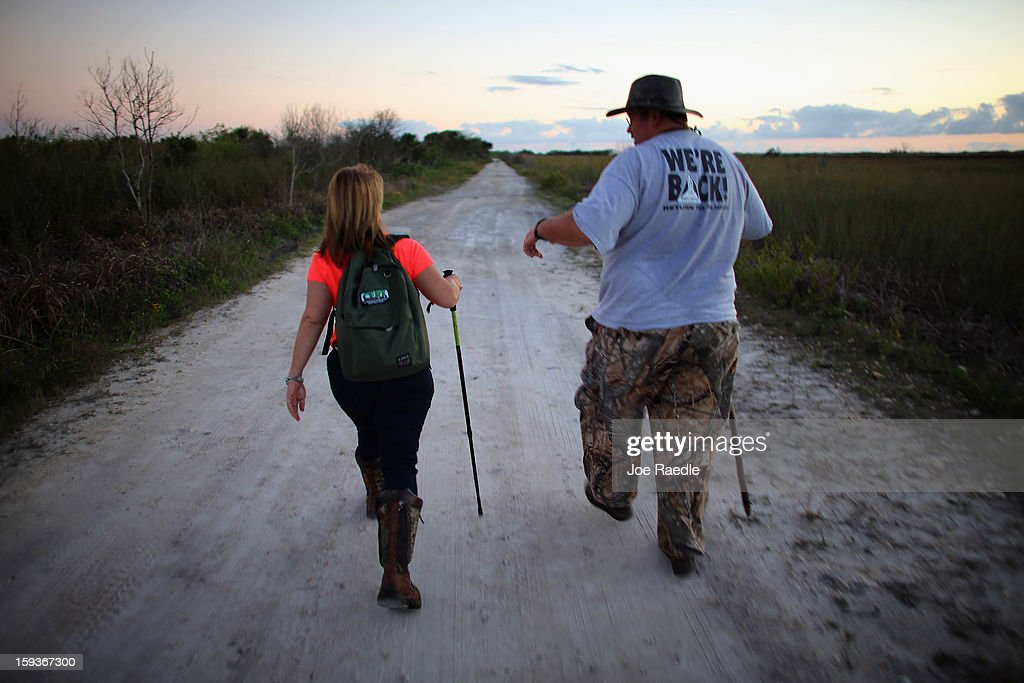 Dan Keenan (R) and Steffani Burd hunt for python's in the Florida Everglades on the first day of the 2013 Python Challenge on January 12, 2013 in Miami, Florida.The Florida Fish and Wildlife Conservation Commission and its partners launched the month long 2013 Python Challenge to harvest Burmese pythons in the Florida Everglades, a species that is not native to Florida.The contest features prizes of $1,000 for catching the longest snake and $1,500 for catching the most.