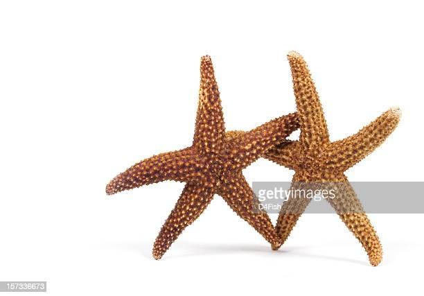 Danza stelle marine