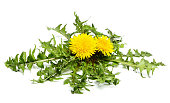 Dandelion flowers with leaves isolated on white background.