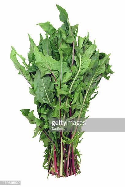 Fleur de pissenlit greens