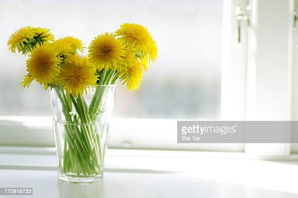Dandelions in Window
