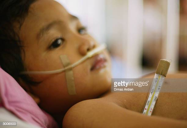 Dandi a young Indonesian boy suffering from dengue fever has his temperature taken as he lies in a hospital bed February 23 2004 in Jakarta Indonesia...