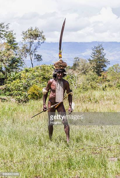 Dani man engaged in a mock battle with a long spear in a display of prowess and opulence of dress and decoration Obia Village Baliem Valley Central...
