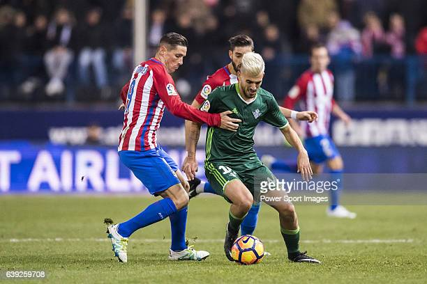 Daniel Ceballos Fernandez 'Dani Ceballos' of Real Betis Balompie competes for the ball with Fernando Torres of Atletico de Madrid during their La...
