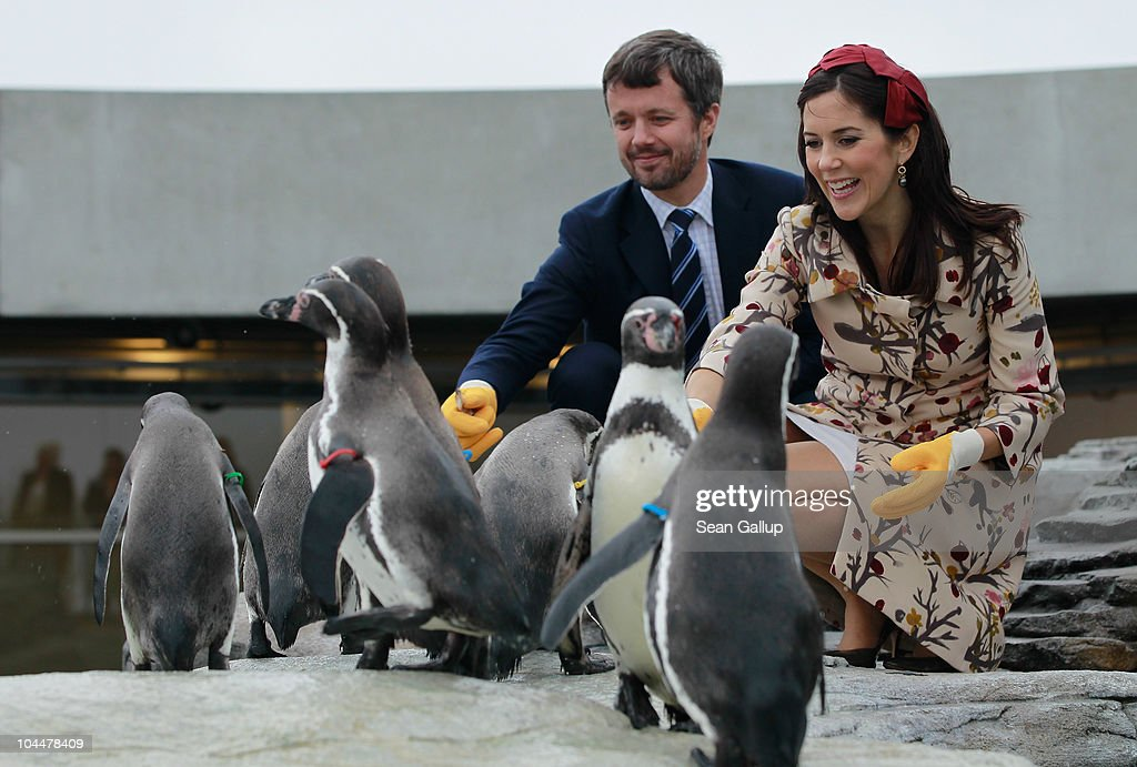 Danish Crown Prince Frederik and Crown Princess Mary, who is pregnant with twins, feed Humboldt penquins at the Ozeaneum maritime museum and aquarium on September 27, 2010 in Stralsund, Germany. Frederik and Mary are on a two-day visit to northern Germany.