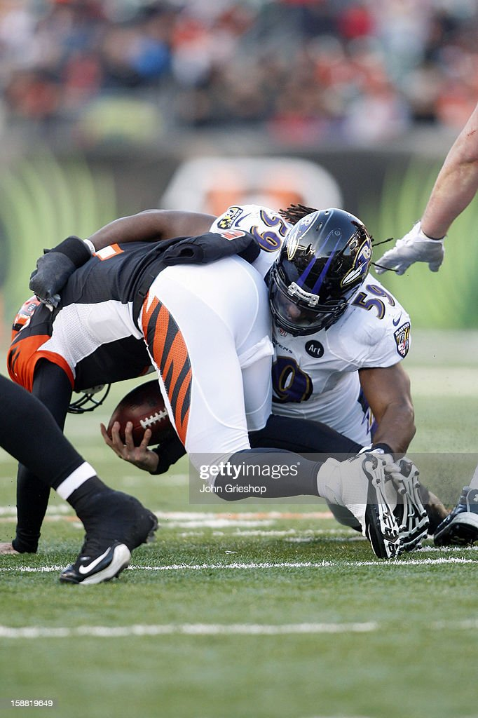 Dannell Ellerbe #59 of the Baltimore Ravens sacks Bruce Gradkowski #7 of the Cincinnati Bengals during their game at Paul Brown Stadium on December 30, 2012 in Cincinnati, Ohio. The Bengals defeated the Ravens 23-17.