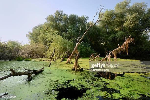 Danube Delta, Murighiol, Romania, Europe
