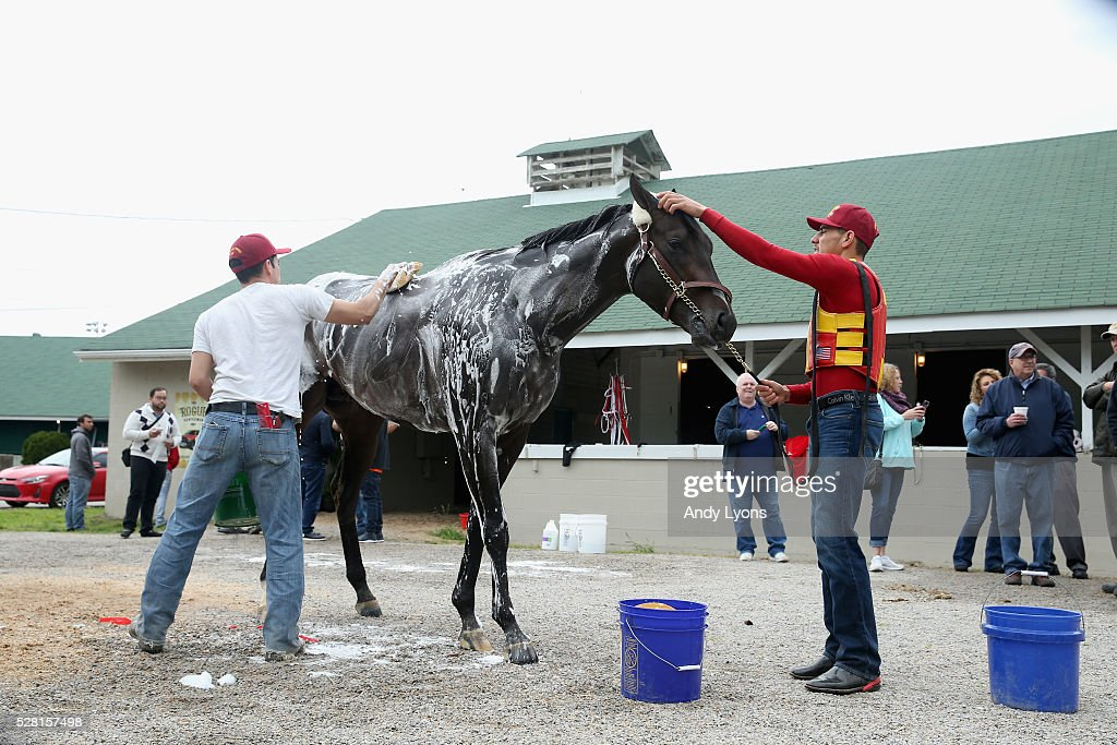 Danzing Candy is washed during the morning training for the 2016 Kentucky Derby at Churchill Downs on May 04, 2016 in Louisville, Kentucky.