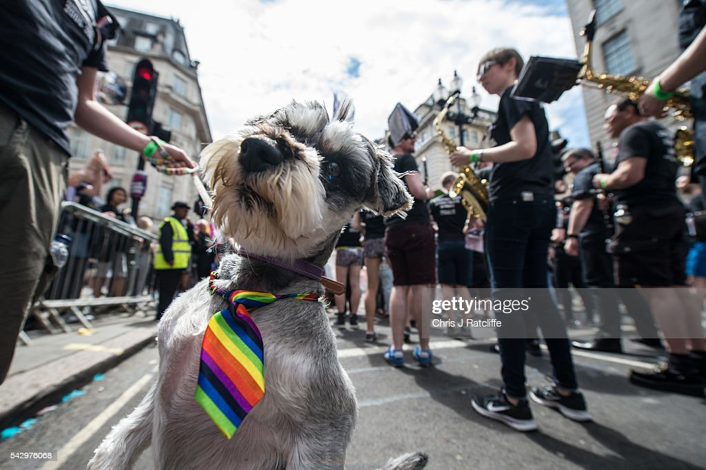 Daphne, a miniture schnouzer, wears a rainbow tie at a march as the LGBT community celebrates Pride in London on June 25, 2016 in London, England. Across the city performances and speeches take place as a parade makes it way through the centre ending in Trafalgar Square. 2016 Pride in London comes just two weeks after Omar Mateen shot dead 50 people at Pulse, a gay nightclub in Orlando, Florida.