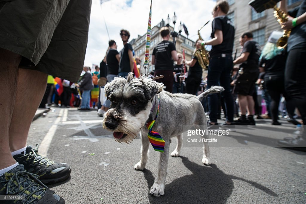 Daphne, a miniture schnouzer, wears a rainbow tie in a march as the LGBT community celebrates Pride in London on June 25, 2016 in London, England. Across the city performances and speeches take place as a parade makes it way through the centre ending in Trafalgar Square. 2016 Pride in London comes just two weeks after Omar Mateen shot dead 50 people at Pulse, a gay nightclub in Orlando, Florida.
