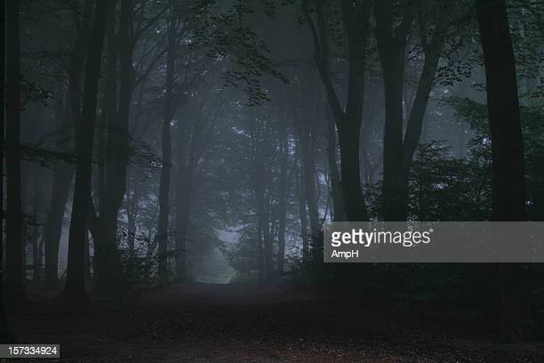 Dark and Foggy Forest Road
