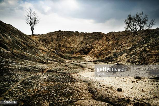 Dark, arid landscape with dead trees and dry soil.