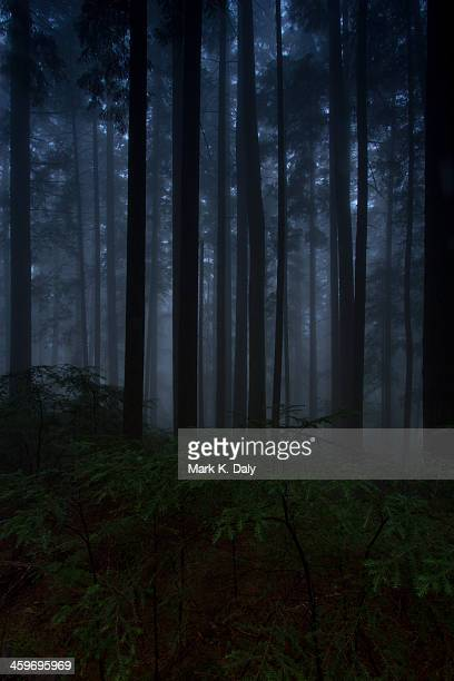 Dark day in the forest