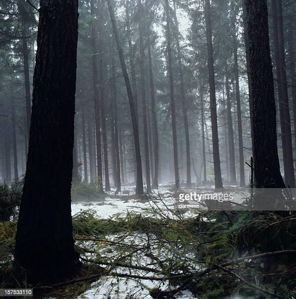 XXXL dark deep forest