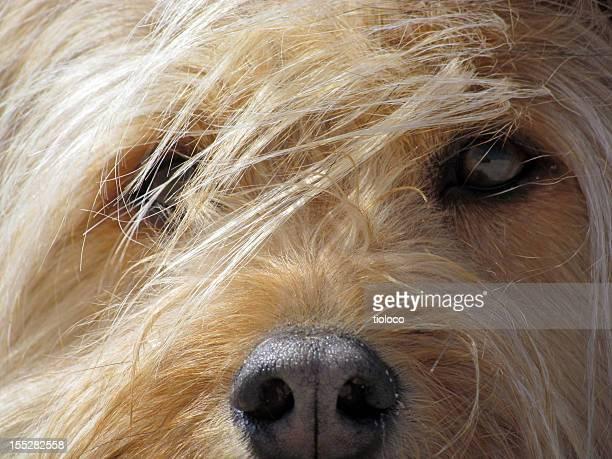 Oscuridad perro ojos