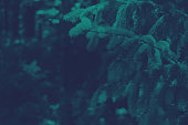 Duotone Dark Evergreen Branches Background