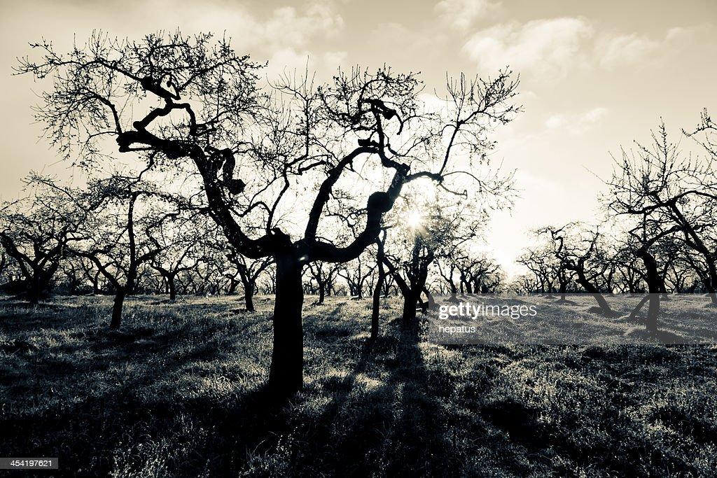 Floresta escura : Foto de stock