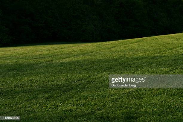 Dark Grassy Field