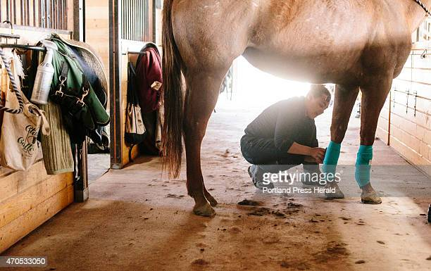 Dark Horse Equestrian Center barn manager Kayla Candelmo puts leg wraps on Cove Bay to protect her tendons and ligaments incase her hooves make...