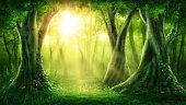 Dark magic forest with sunshine