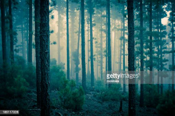 Dark Mystery Forest in the Fog
