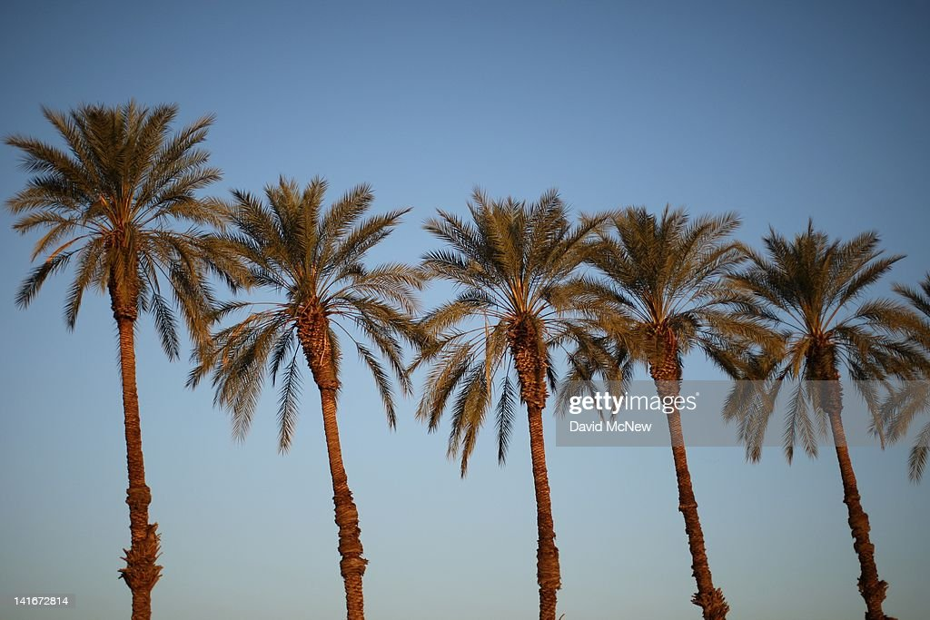 Date palms are seen in an area where a controversial development would create a new town for nearly 40,000 people on the northwest shore of the biggest lake in California, the Salton Sea, on March 21, 2012 south of Mecca, California. The Center for Biological Diversity and the Sierra Club have filed a lawsuit against Riverside County after the Board of Supervisors approved a record-sized development project for Riverside County, saying that it would increase pollution and threaten wildlife in nearby parks at the Salton Sea and in the largest state park in California, Anza-Borrego Desert State Park. Though massive fish die-offs occur annually, drawings in the Travertine Point plans feature peaceful marinas but the lake has been plagued by dropping water levels and increasing salt levels for decades. Scientists say that a catastrophic decline in the fish population is inevitable and a resulting 25 to 50 percent drop in the migratory bird population will destroy a major stopping point in the Pacific bird migration route. The shrinking salt lake is exposing more and more fine dust, posing health problem as blows it across the region. Funding to stop the ecological collapse of the sea is not likely in the near futures with its $9 billion price tag.