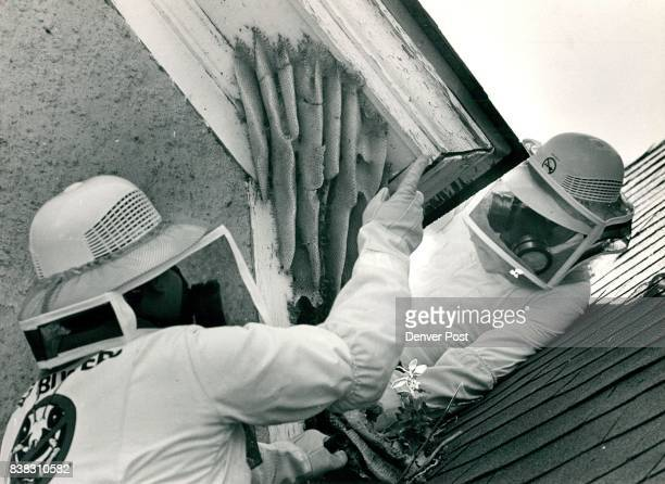 Dave Howell and RKen Busmire both of the 'Bugbusters' insect control company work on checking out the beehive that has existed in the Willow Croft...