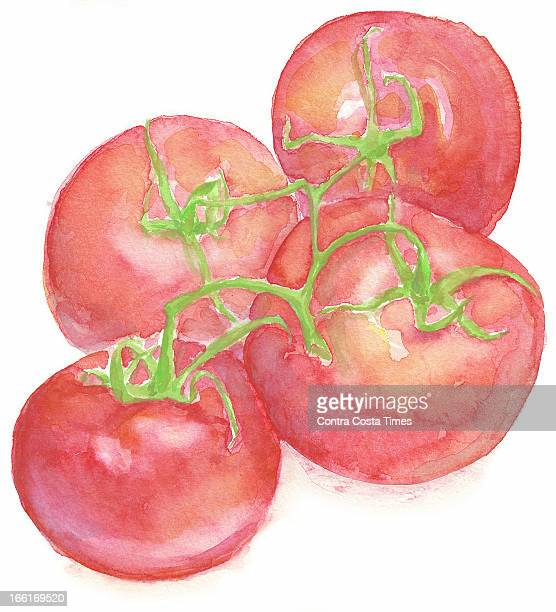 Dave Johnson illustration of cluster tomatoes